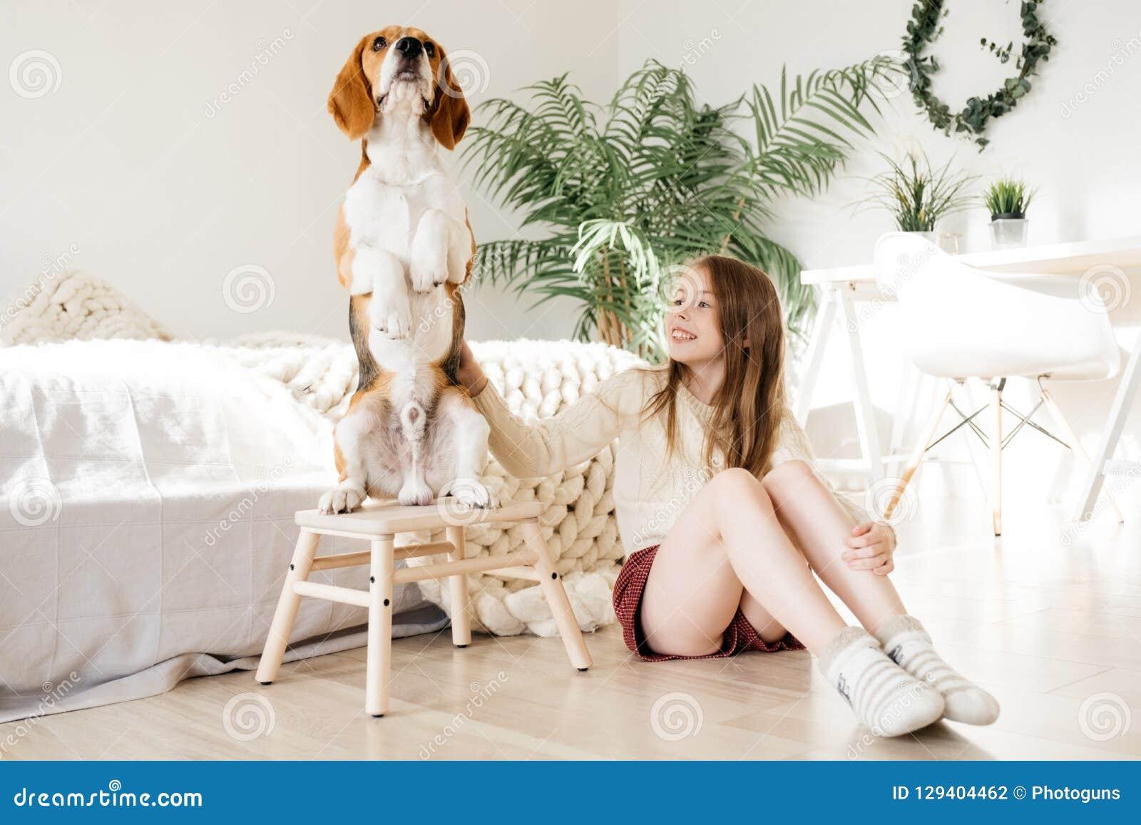 Молодая девушка красивого ребенка обнимая собаку бигля щенка собака стоя вверх на 2 ногах счастье и приятельство, девушка играя с