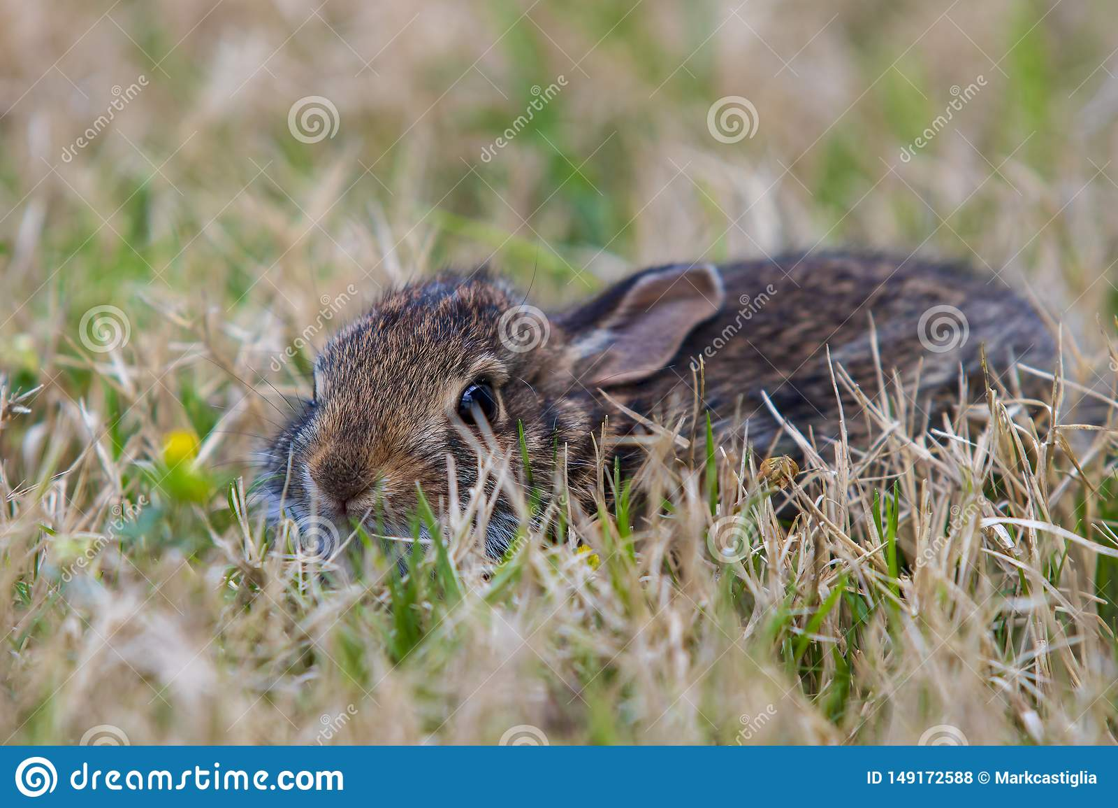 Молодой коричневый кролик в высокорослой траве