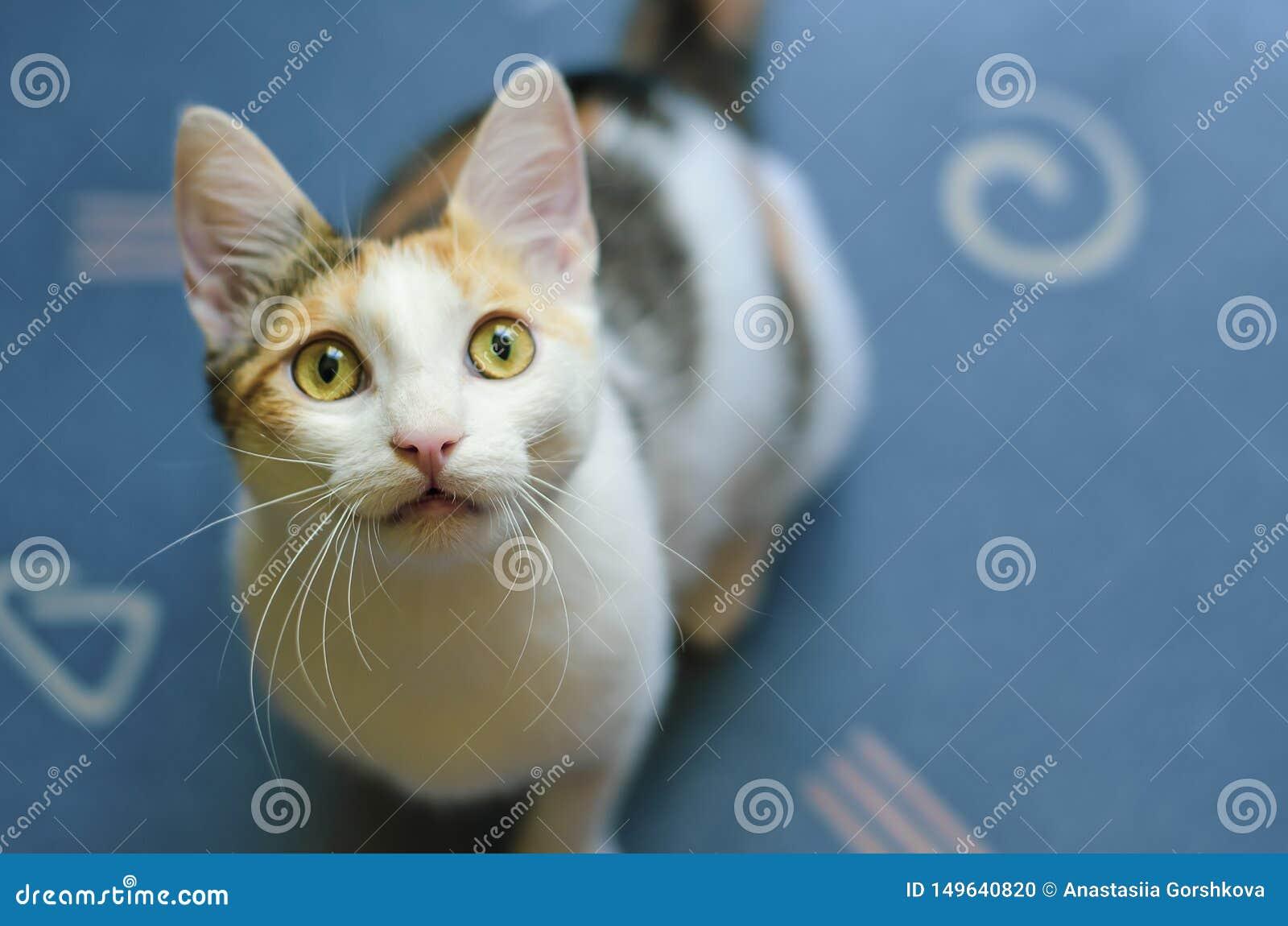 Молодой цвета 3 кот смотря вверх любопытно Любопытный котенок