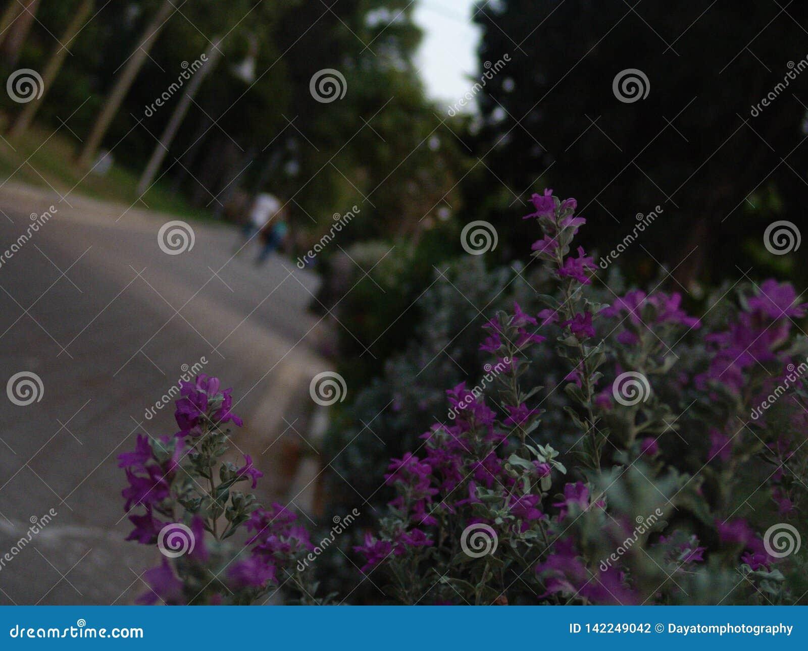 Молодые взрослые предназначенные для подростков пары идя далеко от камеры на зеленом парке вымостили переулок на заходе солнца с