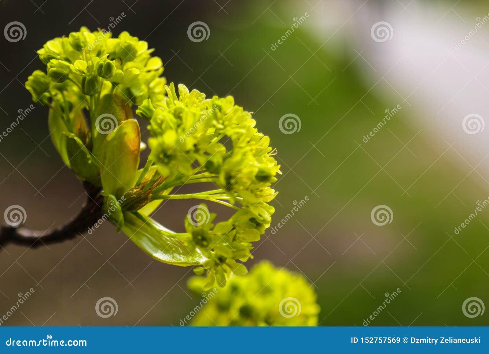 Молодые заводы ветви весной или лето в солнце, предпосылка природы