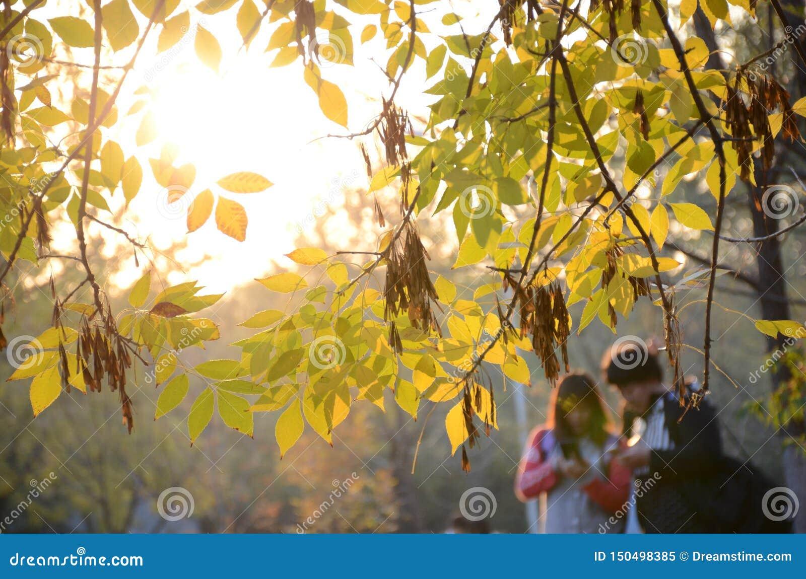Молодые пары в чтении в лесе