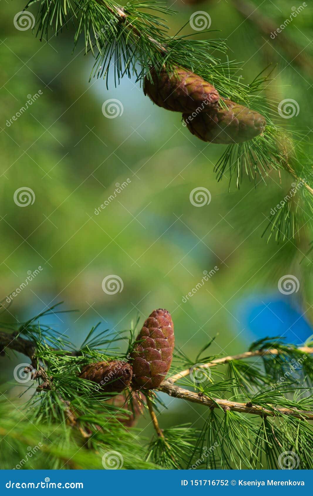 Молодые рему на дереве
