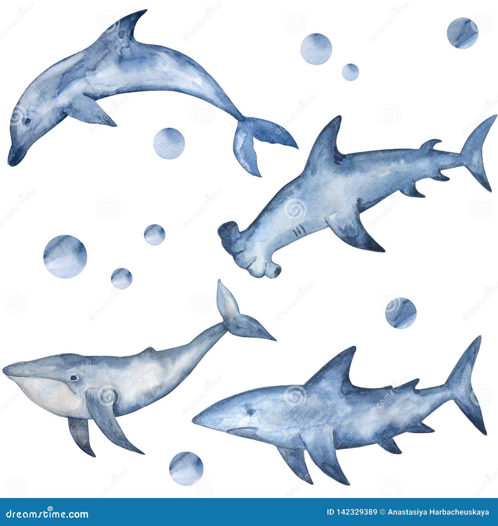 Молот, акула, дельфин и кит акварели Рука покрасила подводных жителей