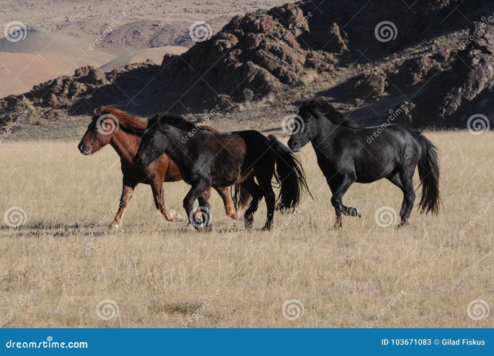 Породы лошадей. Андалузкая лошадь. Общая характеристика.