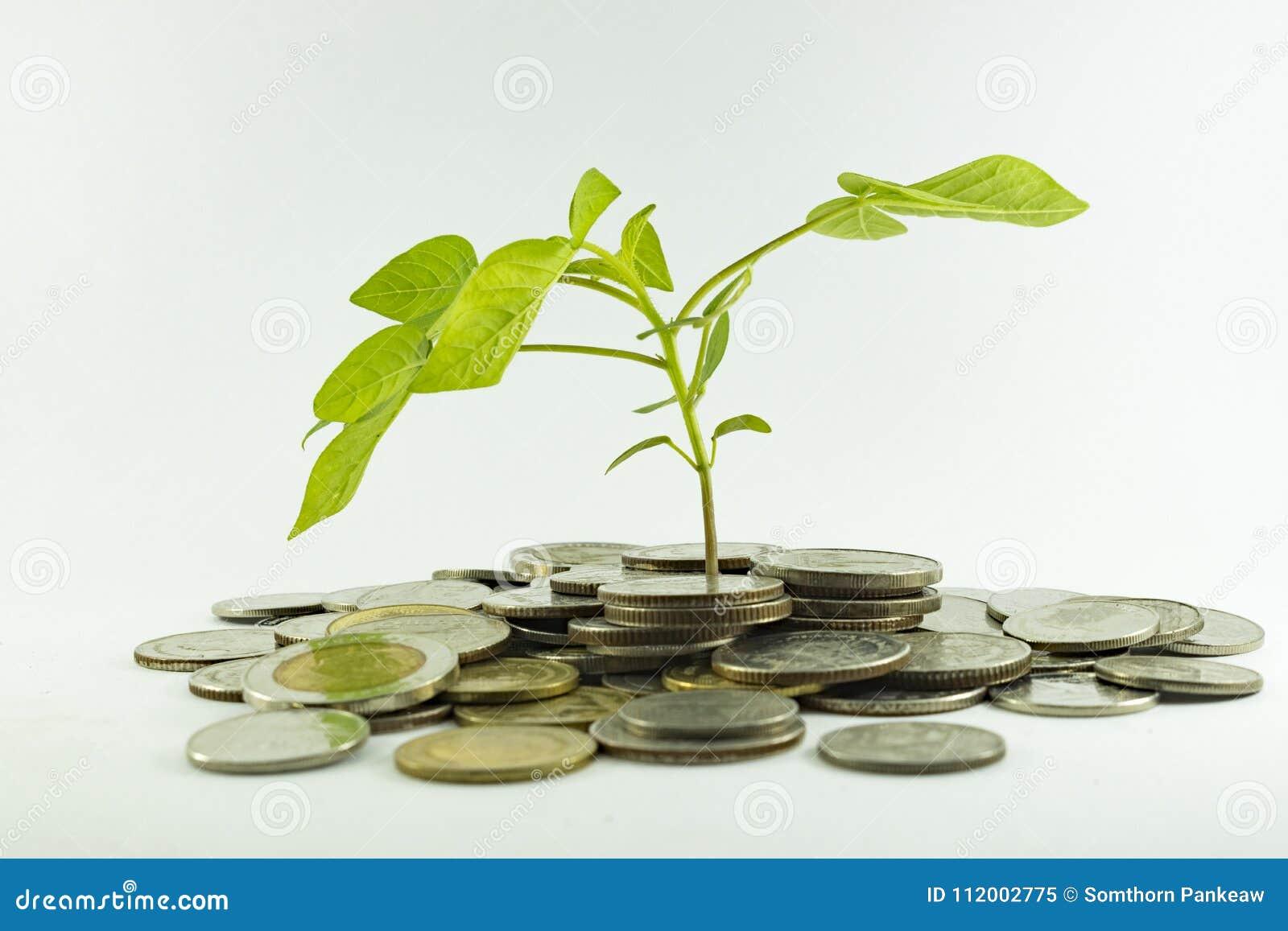 Монетки Таиланда бата с деревьями