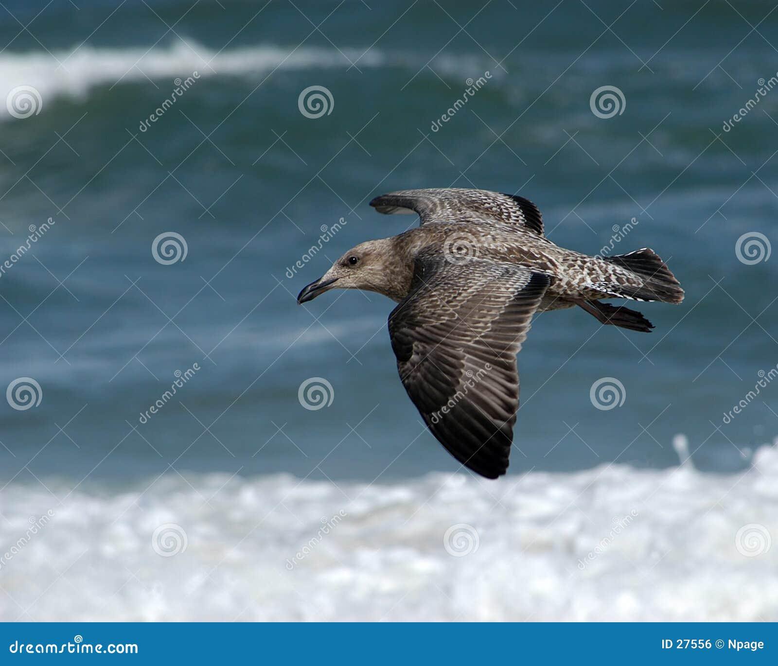 море птицы