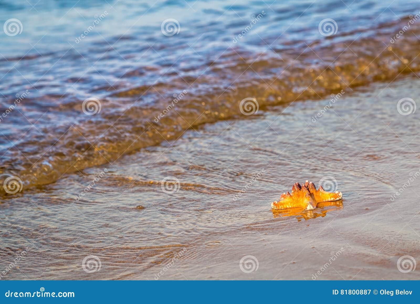 Морская звёзда лежит на влажном песке на пляже