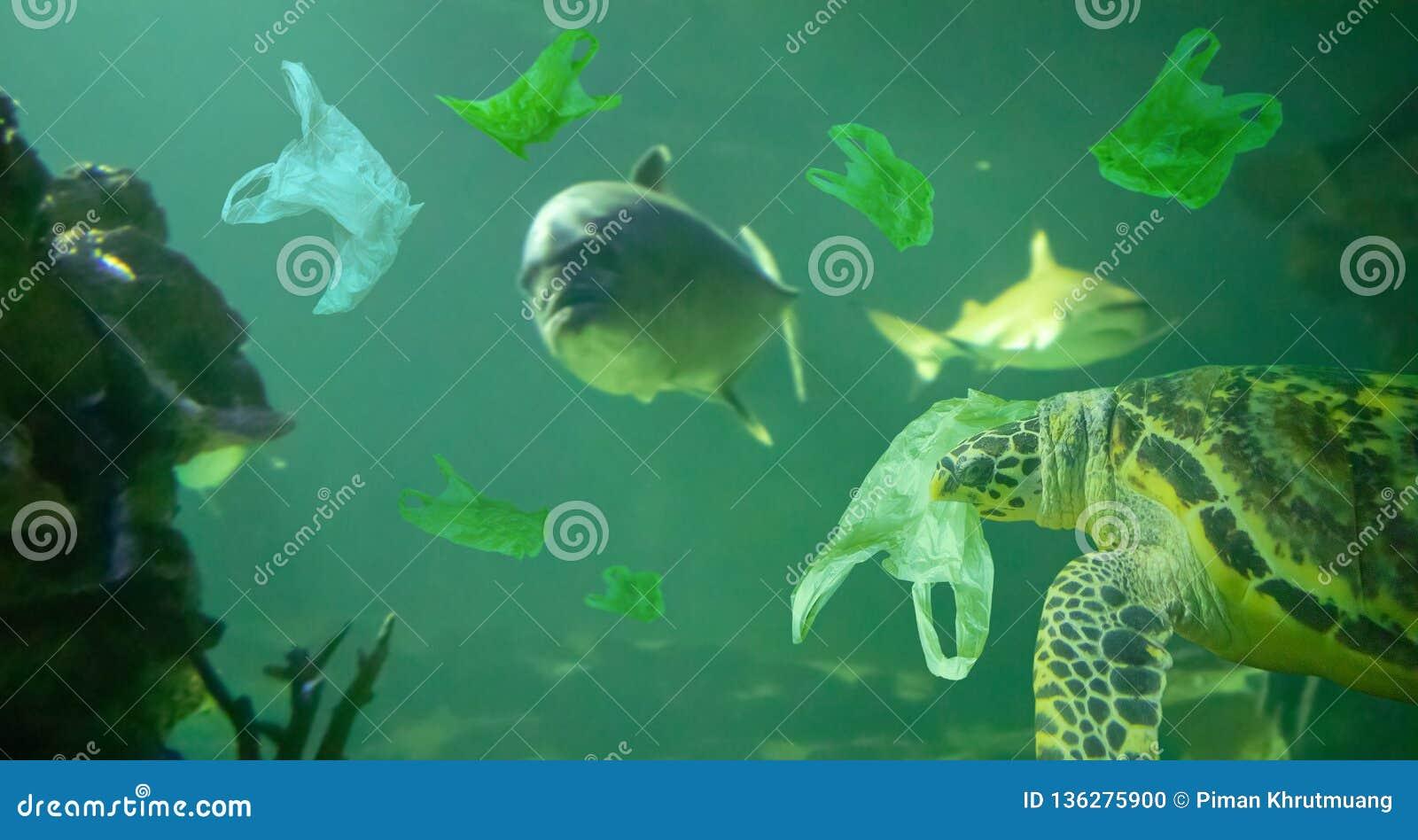 Морская черепаха ест океан полиэтиленового пакета, концепцию загрязнения