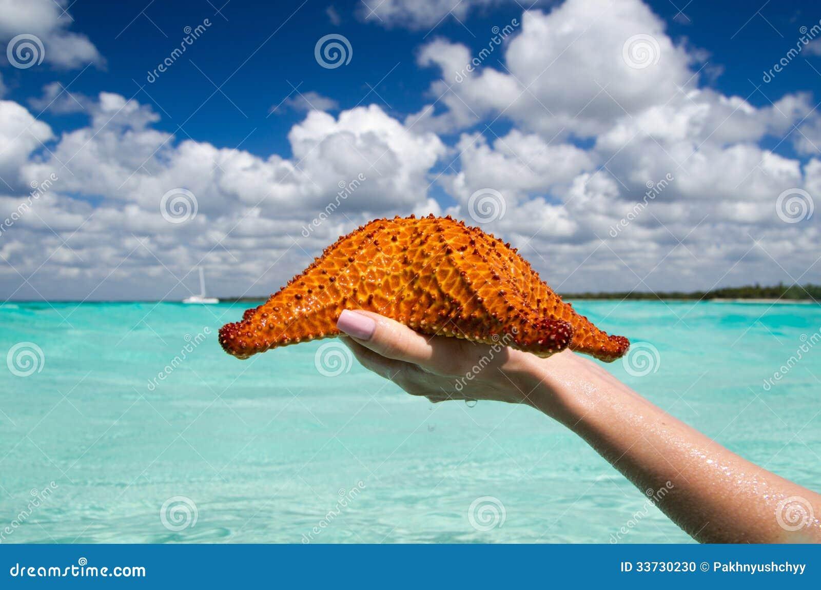 Морские звёзды в руке