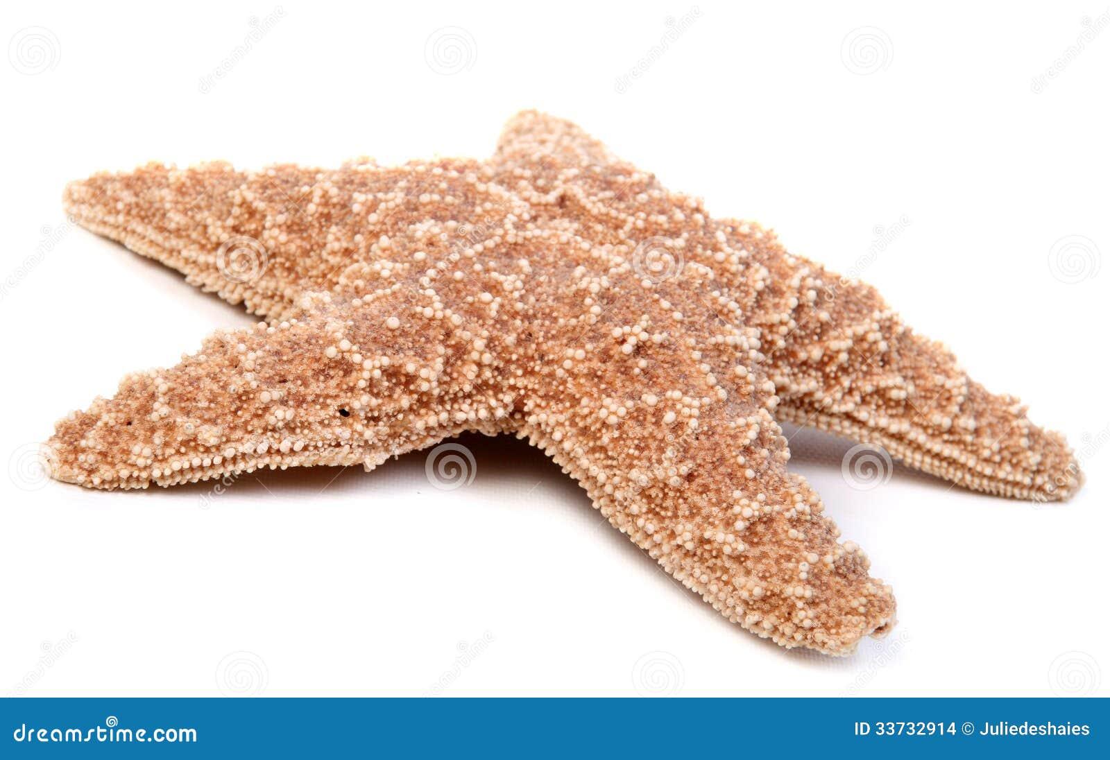 Морские звёзды над белизной
