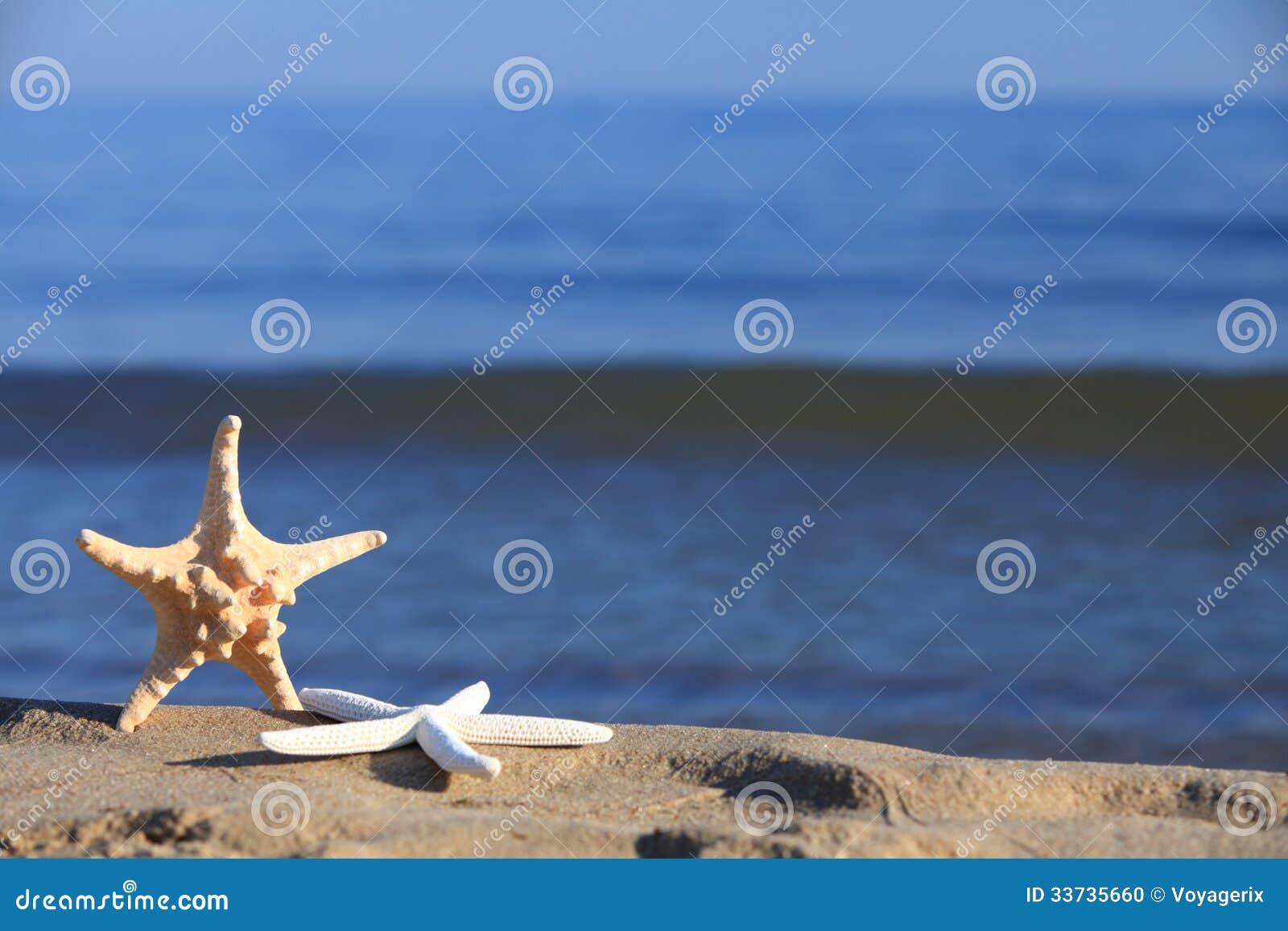 Морские звёзды на пляже на предпосылке океана