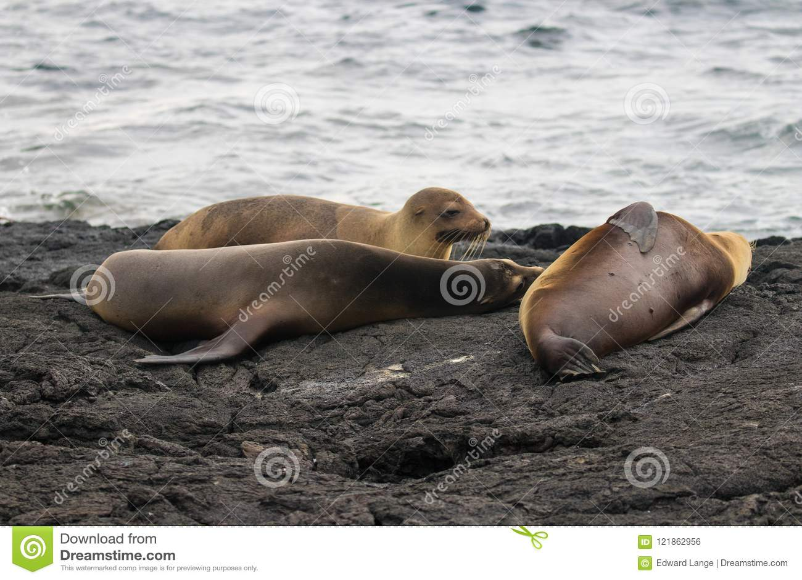 Морские котики на островах Галапагос