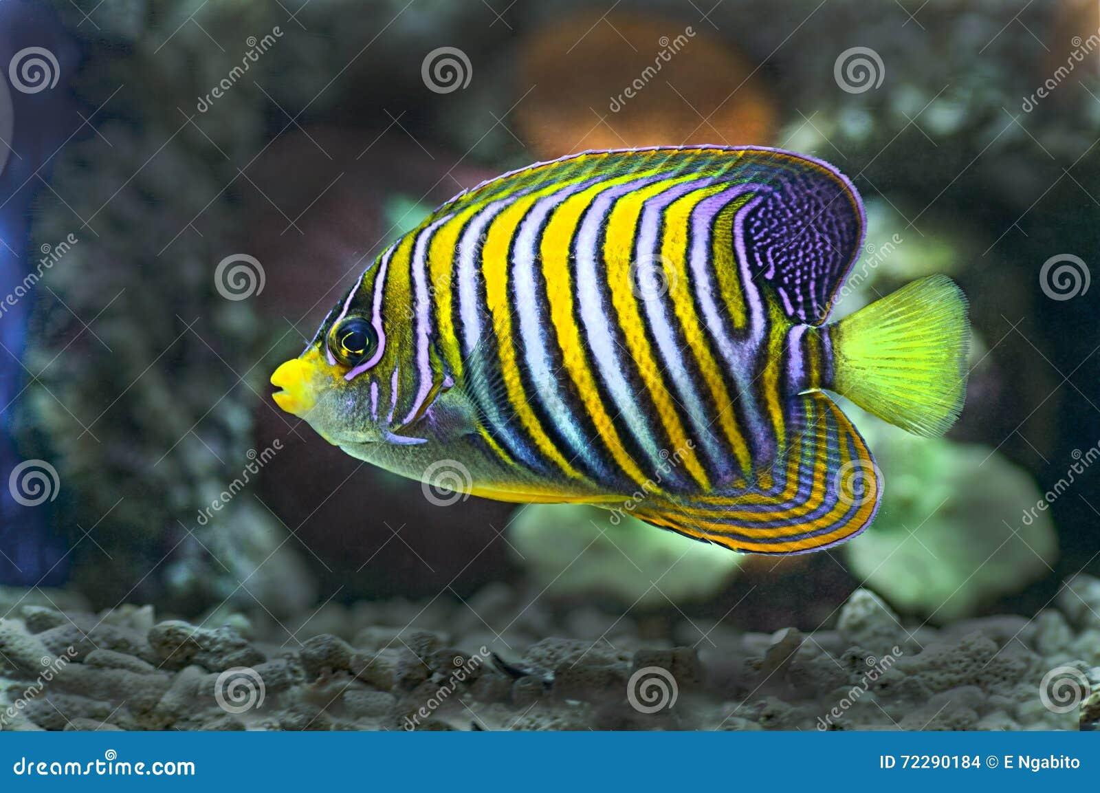 Download Морские рыбы стоковое фото. изображение насчитывающей anded - 72290184