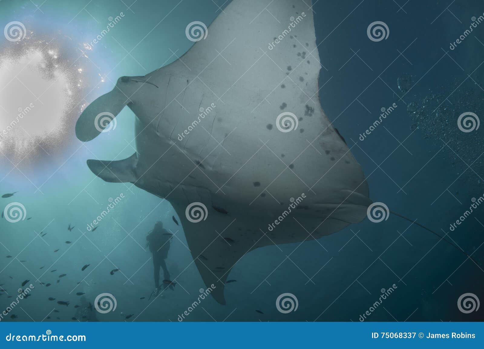 Морской дьявол рифа