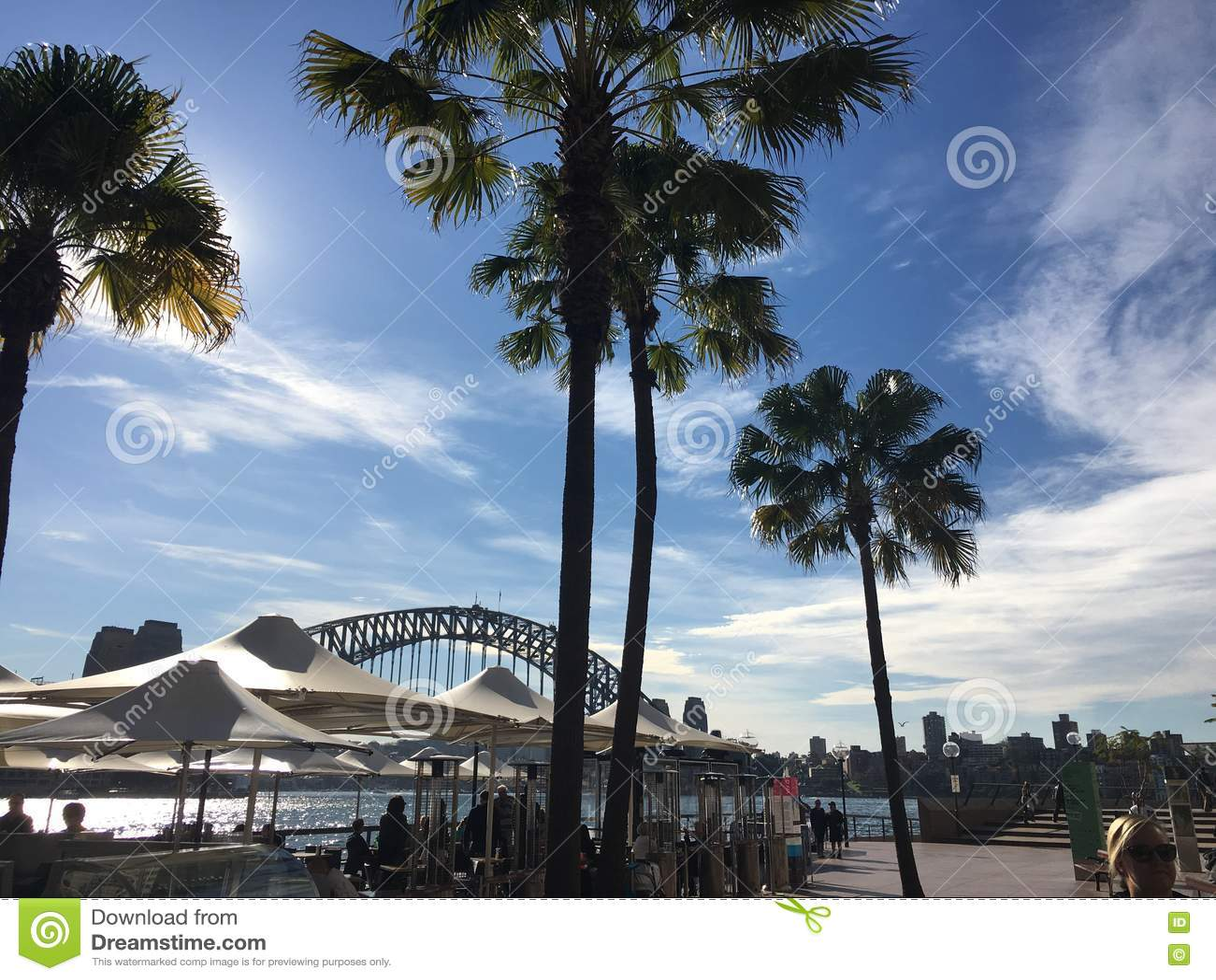 Мост гавани Сиднея через пальмы