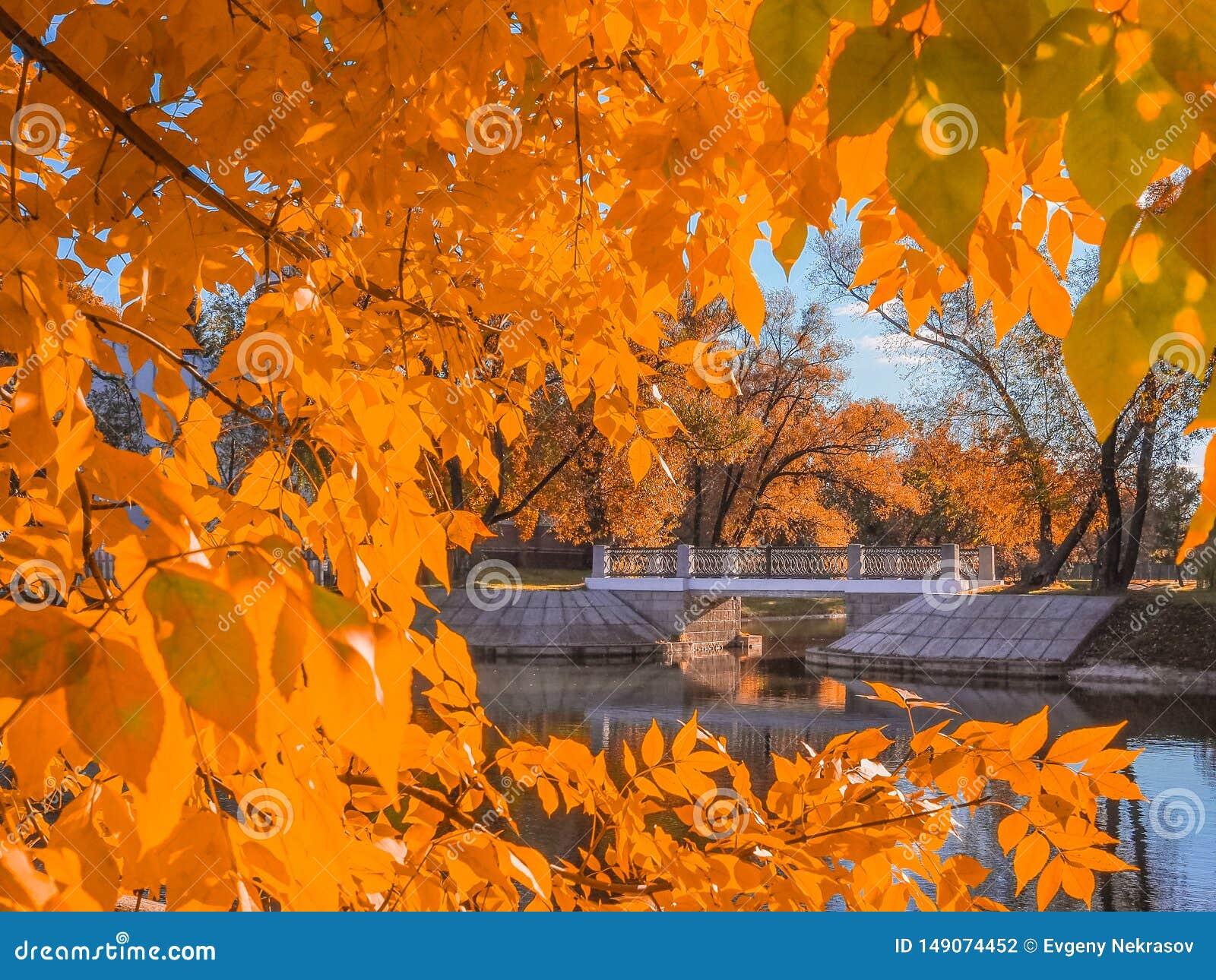 Мост над речным руслом обрамленным желтым листопадом