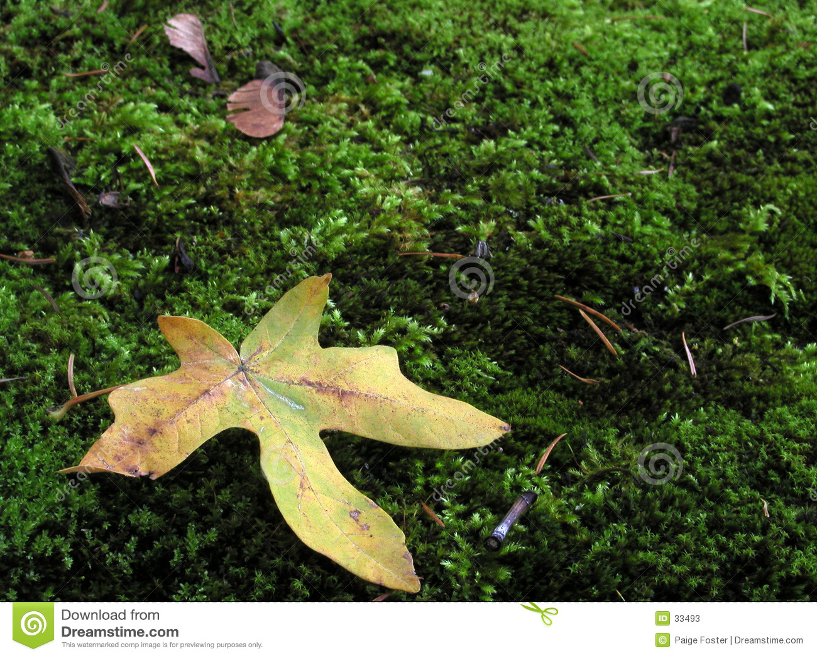 мох листьев