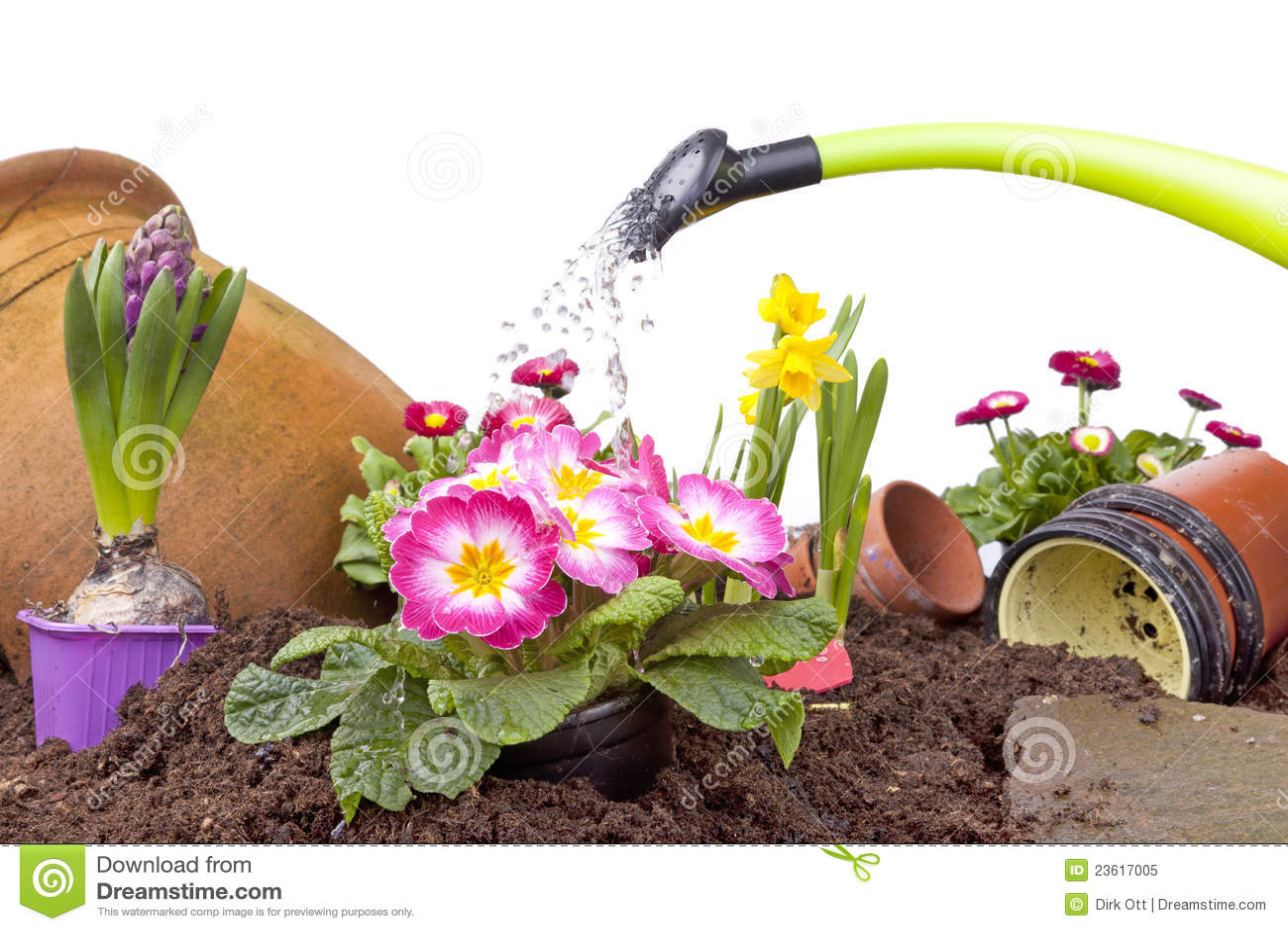 мочить цветков