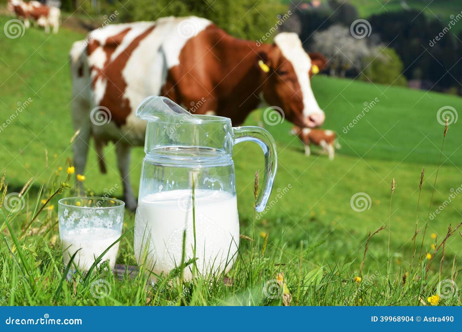 Молоко и корова стоковое фото. изображение насчитывающей ...