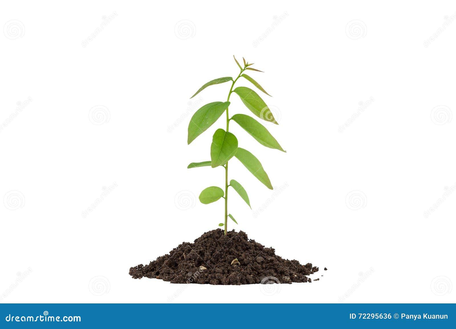 Download Молодое зеленое растение на почве, на белой предпосылке Стоковое Фото - изображение насчитывающей идея, определите: 72295636