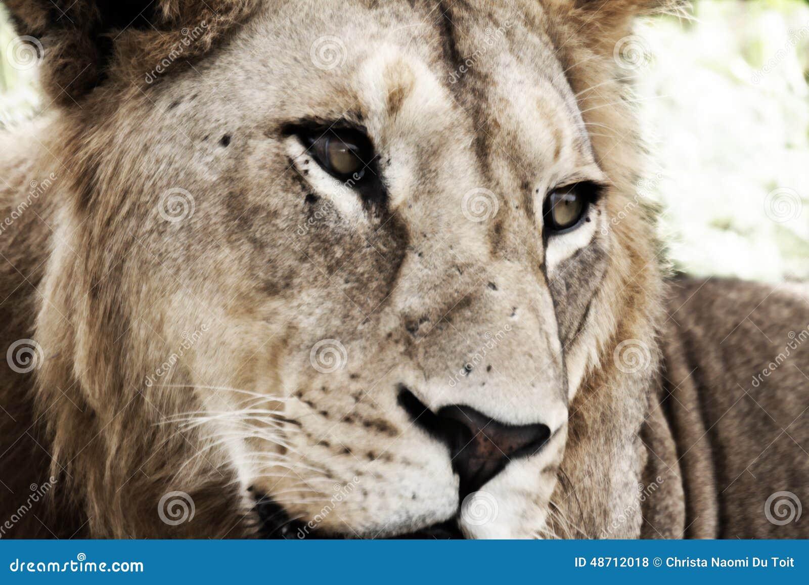 Молодой мужской лев (художнический обрабатывать)