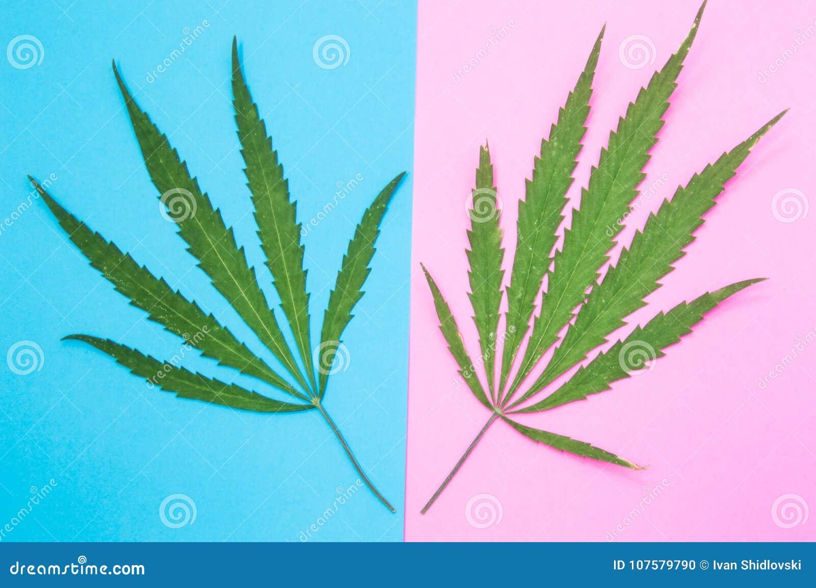 чудо трава марихуана