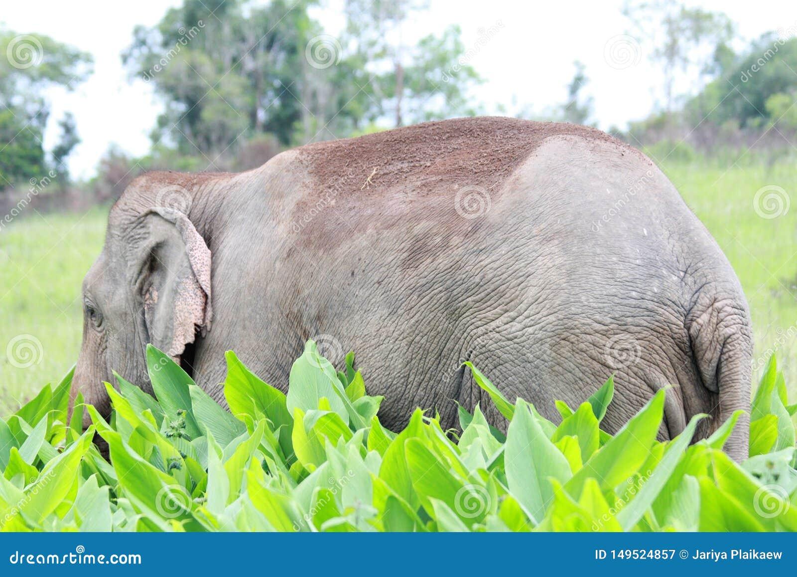 Мужское положение слона в поле