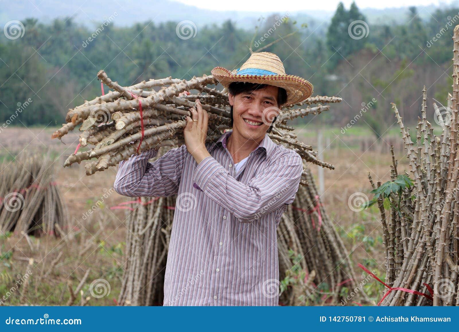 Мужское положение фермера и лимб тапиоки плеча который отрезал стог совместно в ферме