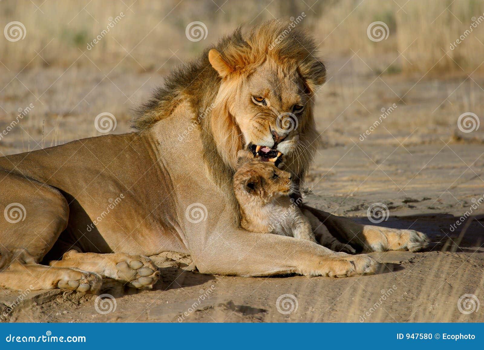 мужчина льва новичка
