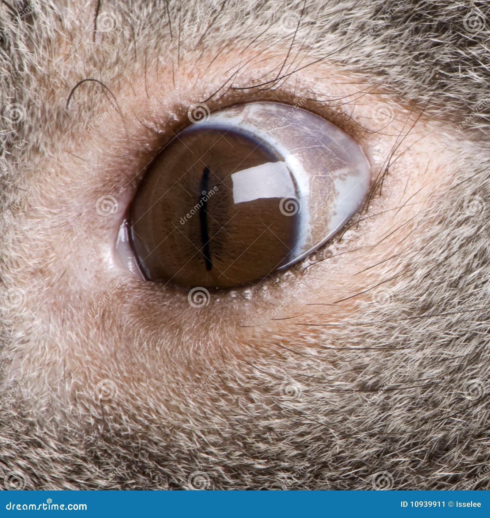 мужчина koala глаза медведя близкий вверх