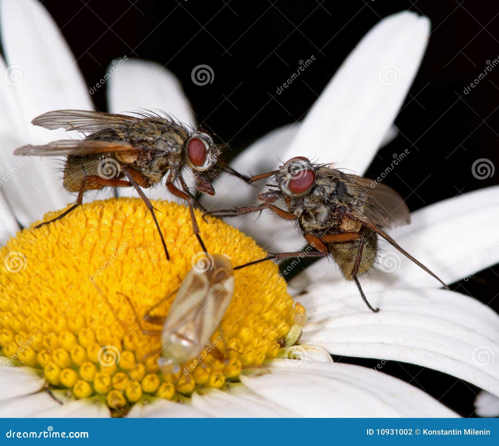 мухы 2