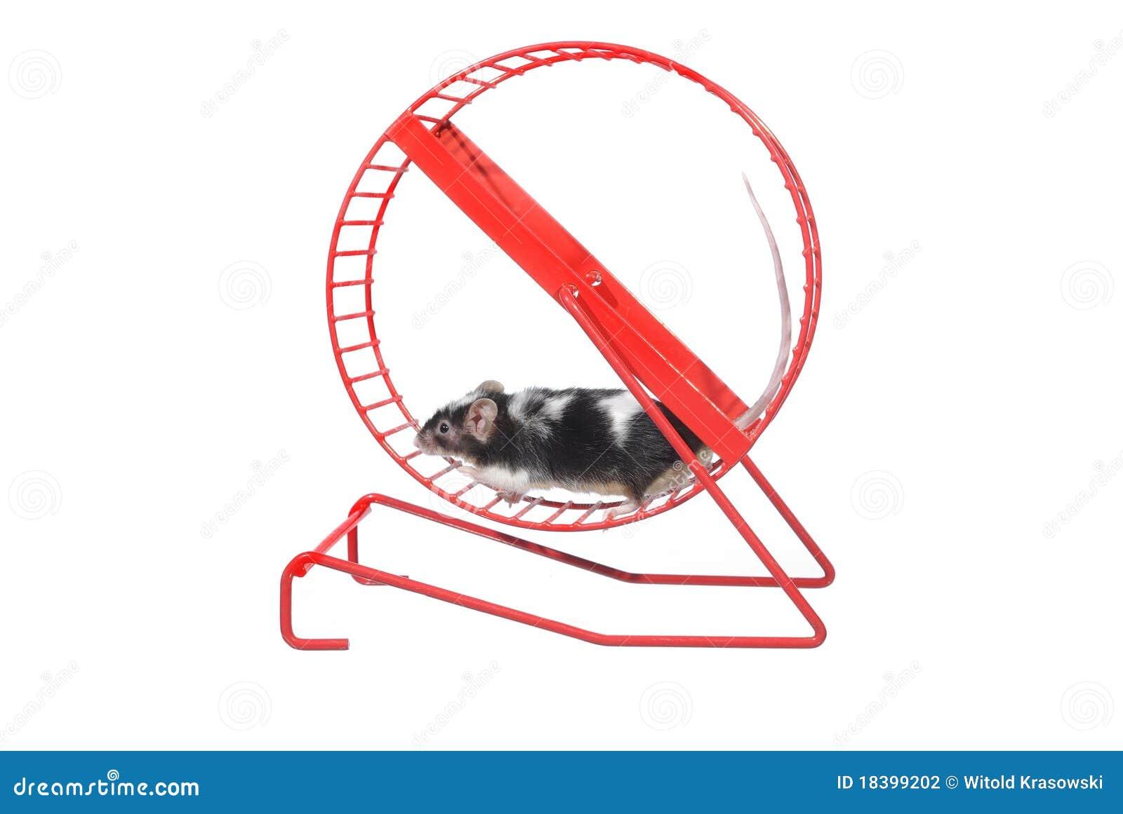 Мышь в вращательном колесе
