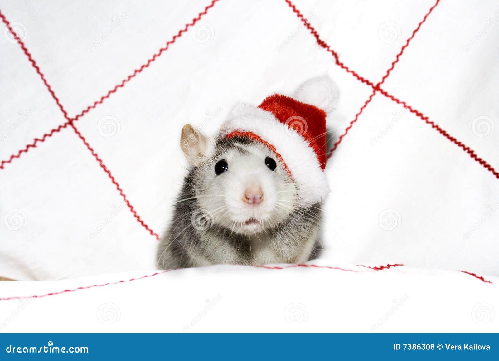 мышь рождества