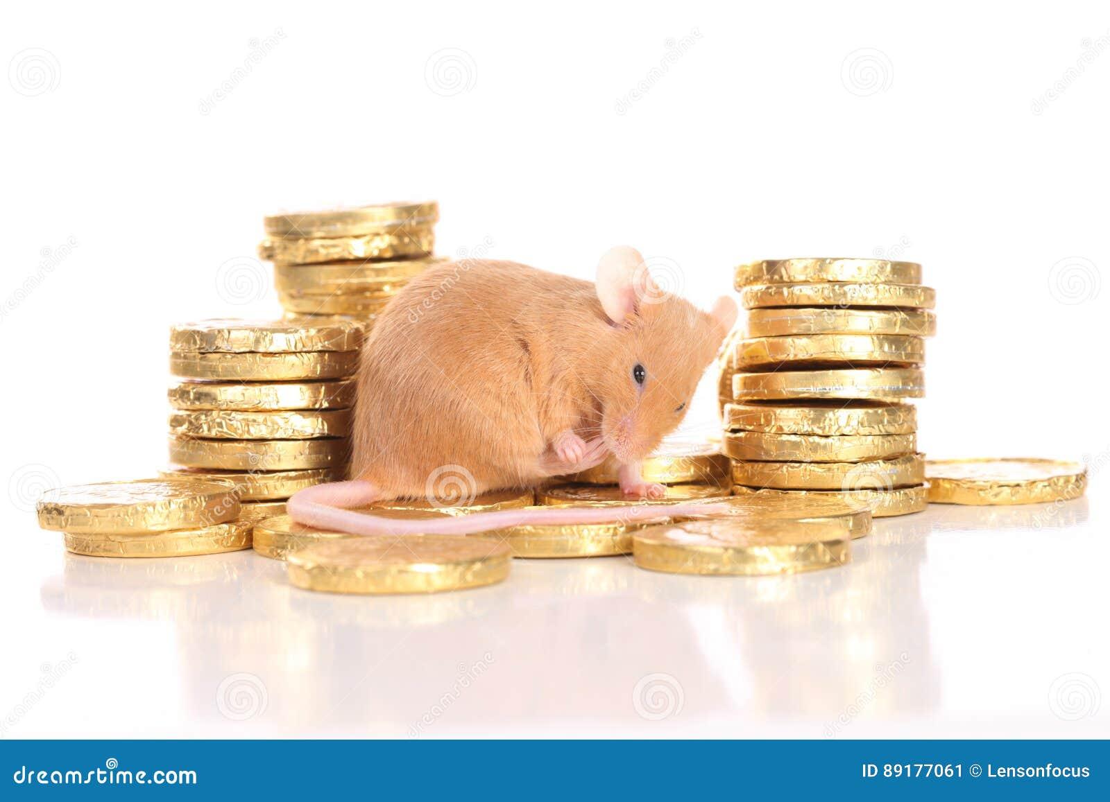 Мышь с золотыми монетками
