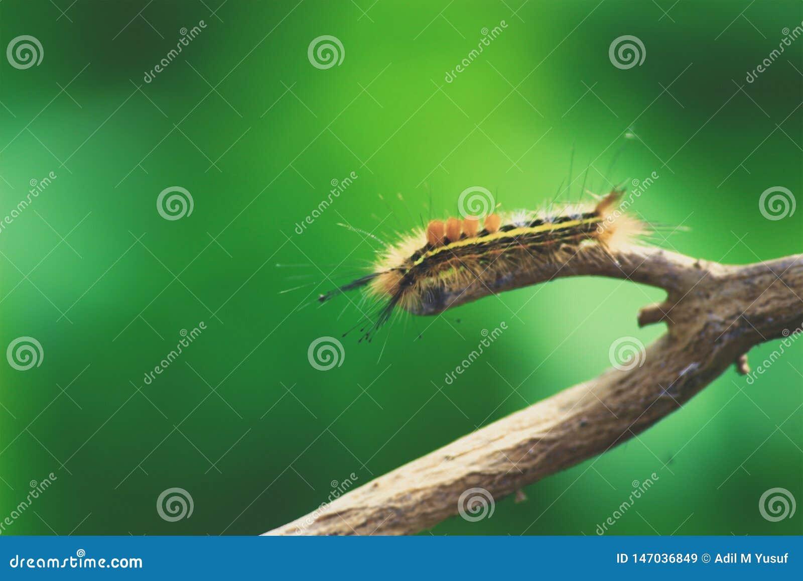 Мягкие гусеницы на дереве