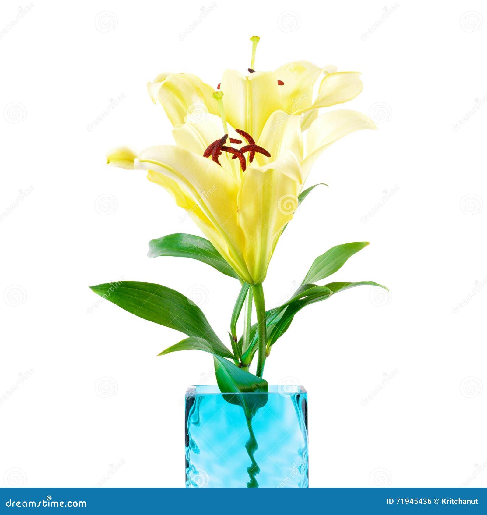 Мягкие желтые цветки лилии в квадратной вазе