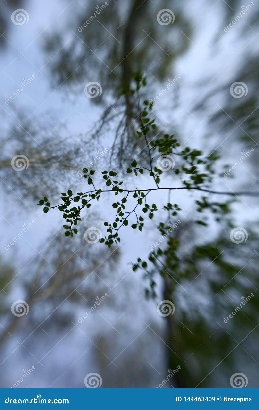 Мягко листья зеленого цвета