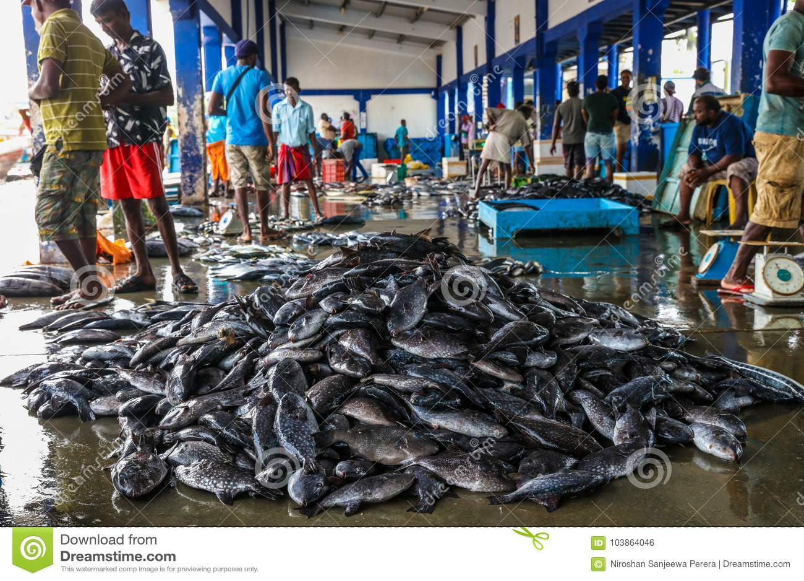 Мясо тунца на рыбном базаре в гавани Beruwala, Шри-Ланке