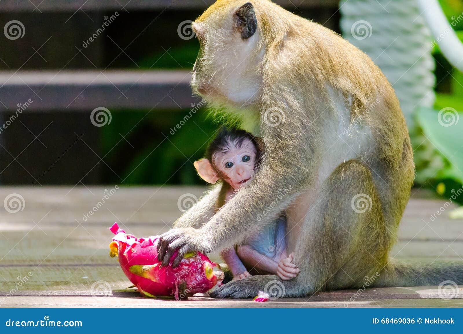 Младенец обезьяны подавая