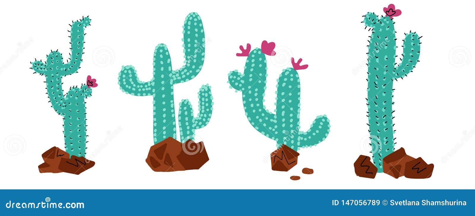 Набор собраний кактуса Кактусы завод, вектор пунктируют концепцию цвета doodle руки вычерченную Дикие кактусы пустыни с цветками