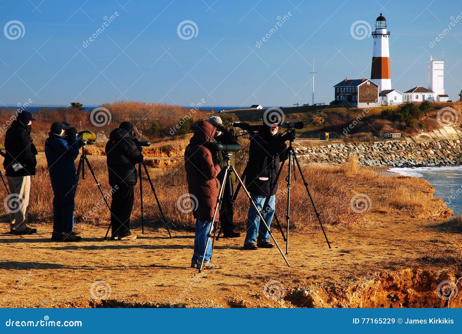 Наблюдатели птицы на этап Montauk