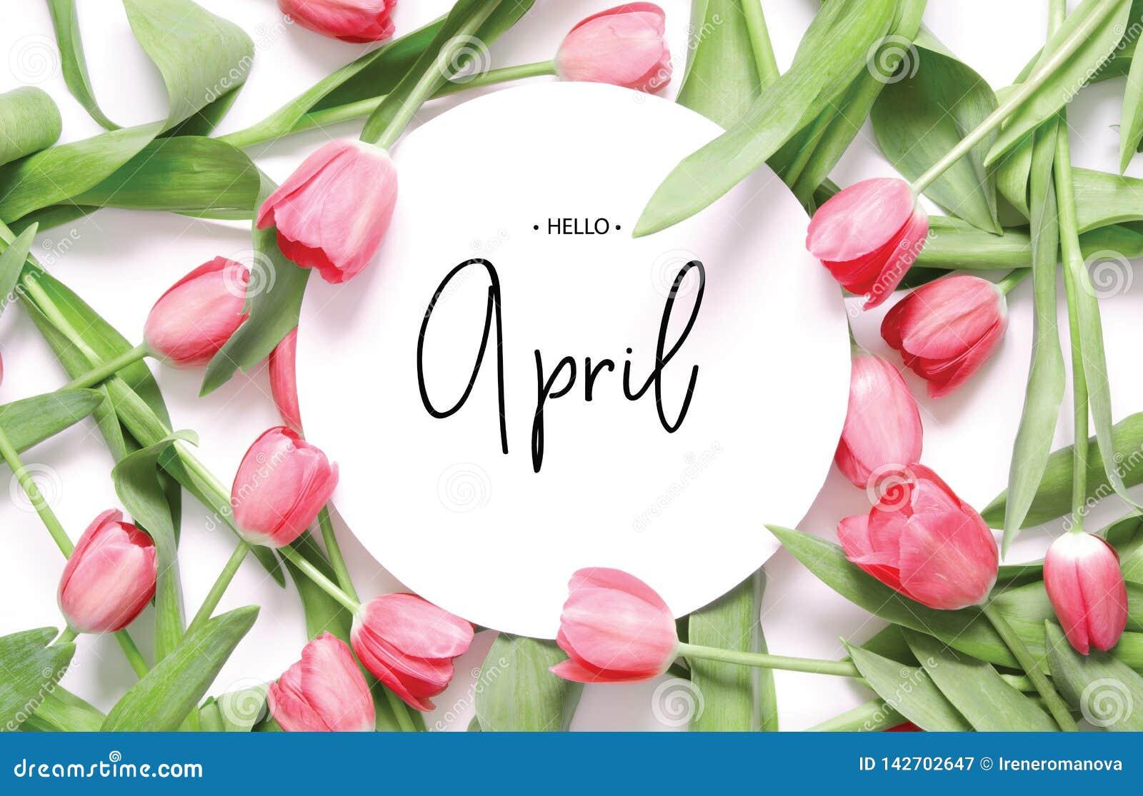 Надпись здравствуйте апрель Цветок тюльпана