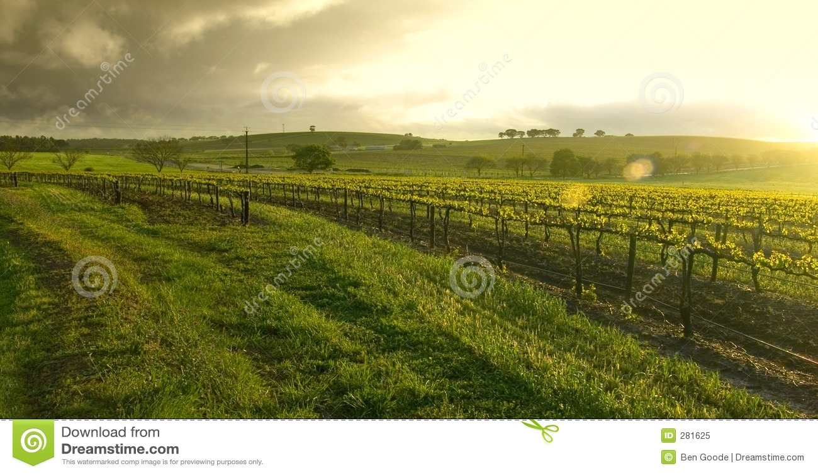 над виноградником восхода солнца