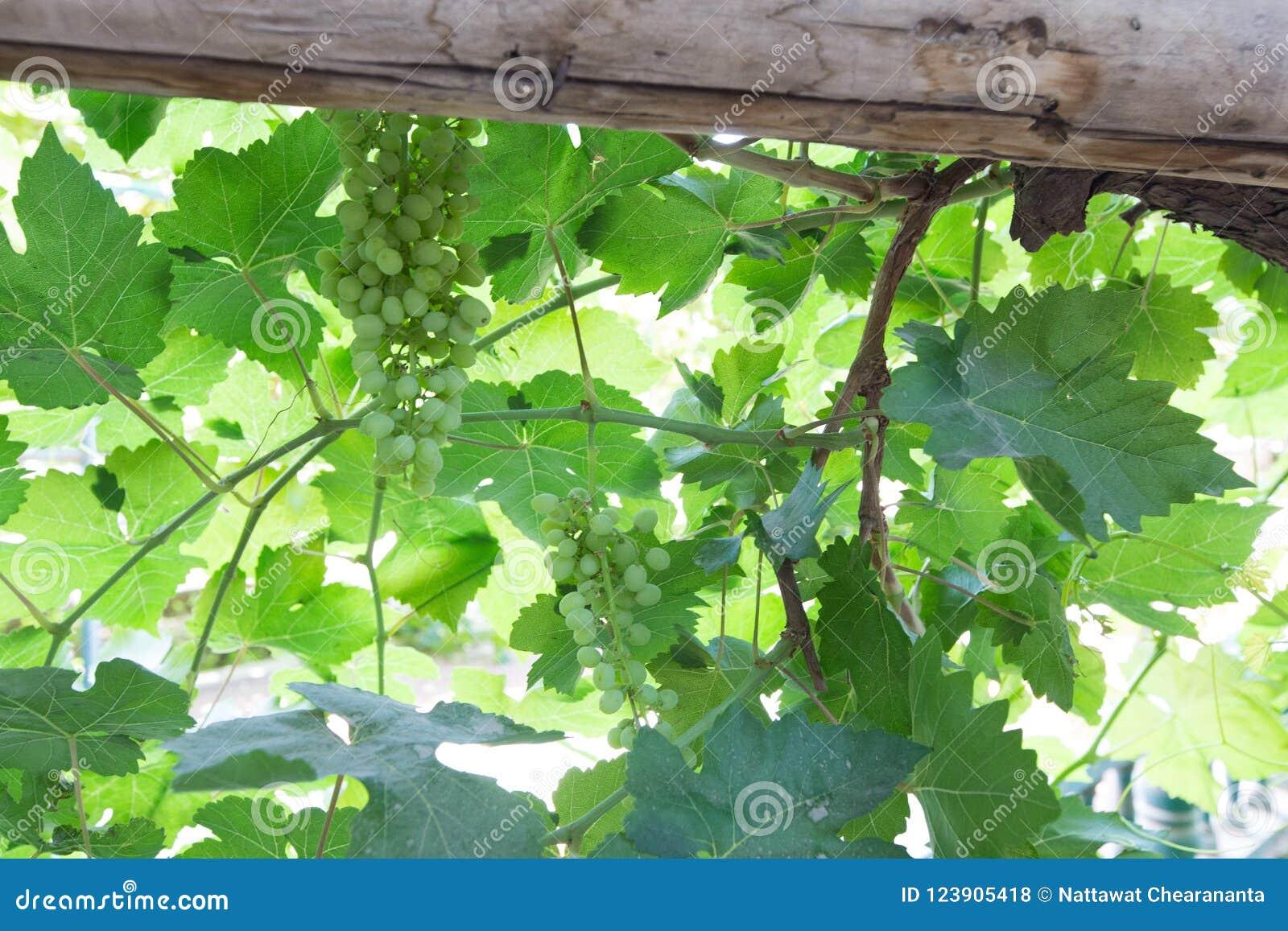 Назначение шелкового пути двор и ром виноградины