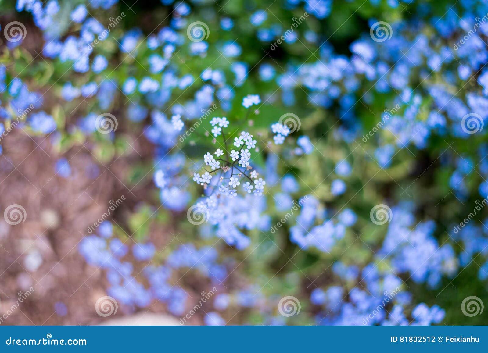 Назовите неизвестные цветки на стороне дороги весной