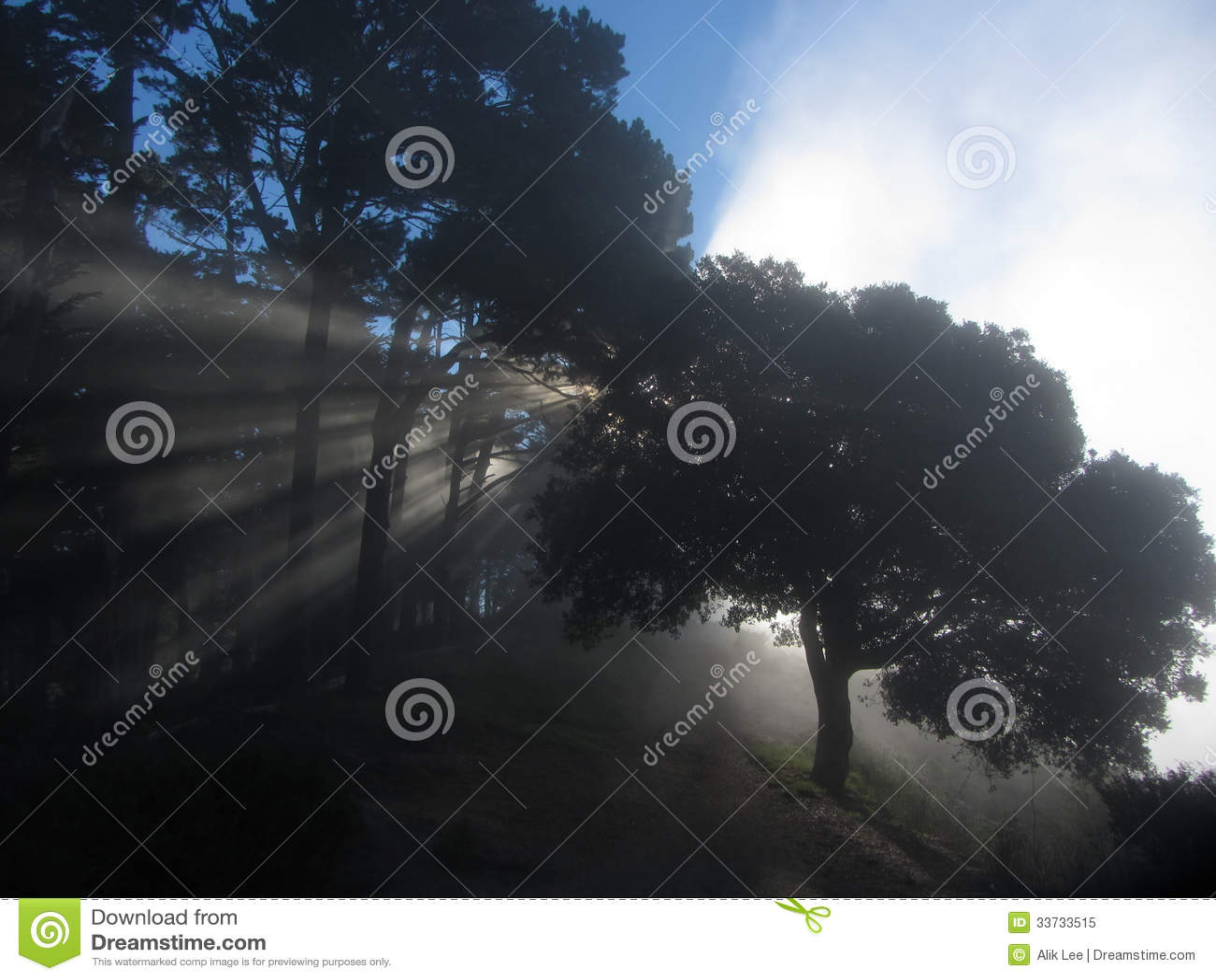 Нападение тумана утра