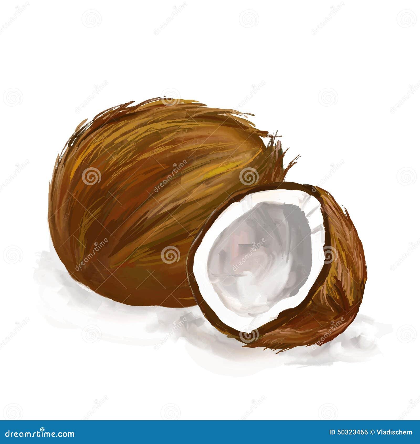 Нарисованная рука иллюстрации вектора кокоса покрашенной