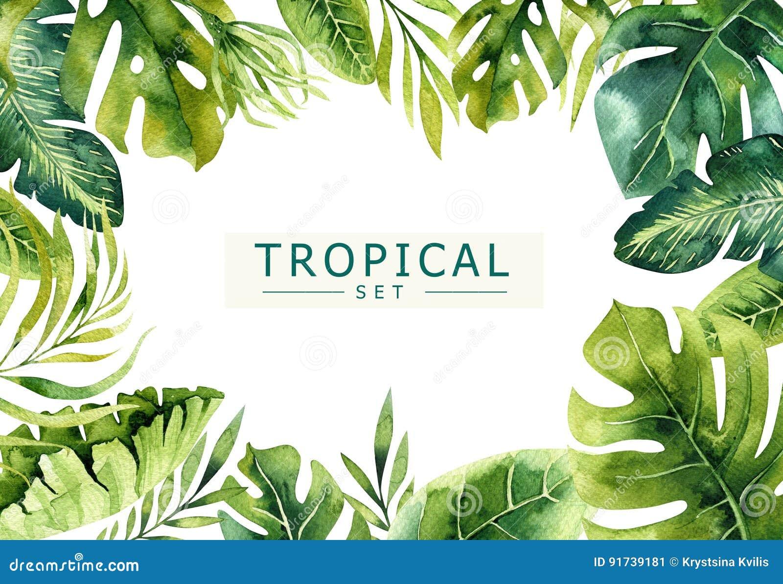 Нарисованная рукой предпосылка тропических заводов акварели Экзотическая ладонь выходит, дерево джунглей, элементы Бразилии тропо