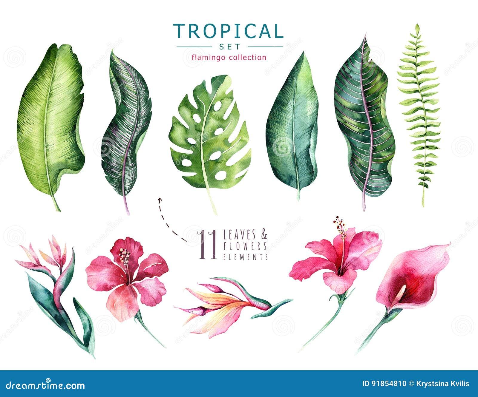 Нарисованные рукой установленные заводы акварели тропические Экзотические листья ладони, дерево джунглей, элементы ботаники Брази